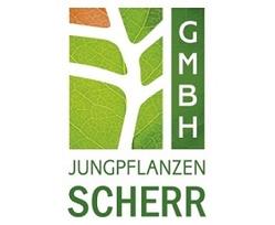 Jungpflanzen Scherr GmbH