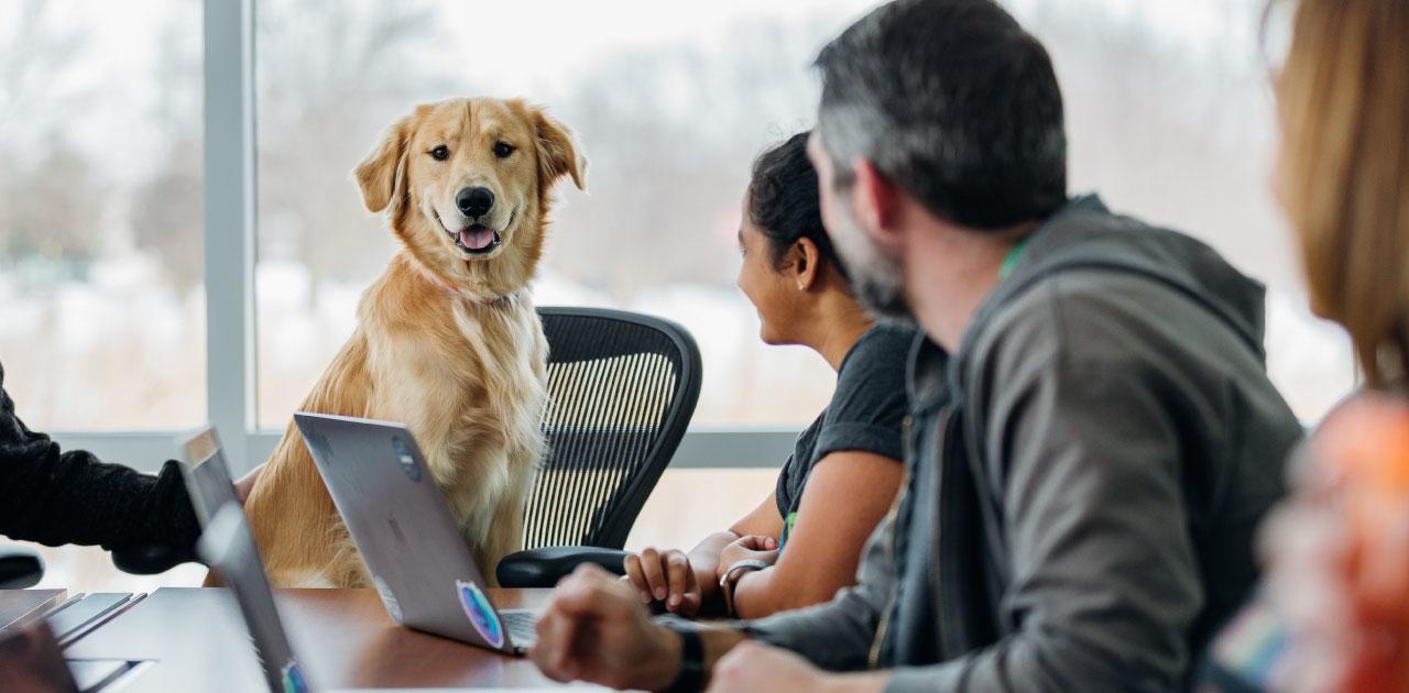 Vollzeitjob und Hund